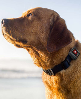 GPS for dogs & cats